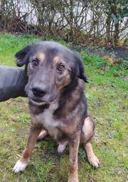 Tierschutzhund Hope sucht ein Zuhause