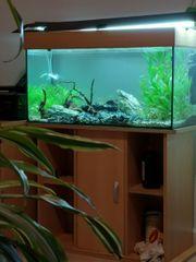 120 Liter Aquarium mit Unterschrank