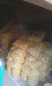 Kartoffeln zu verkaufen Ernte 2019