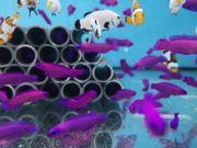 Pseudochromis fridmani Nachzucht Angebot des