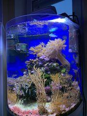 Meerwasser Salzwasser Korallen