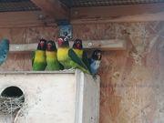 Vögel aus Hobbyhaltung