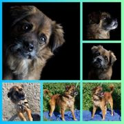 Rüde Hund Bean 7 Jahre