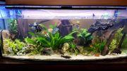 komplett-Aquarium Panorama 150x50x60cm 420l inkl