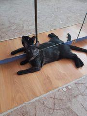 Katzenmädchen Muna sucht ein tolles