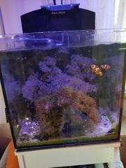 Meerwasseraquarium Aqua Medic Blenny komplett