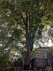 Kronenpflege vom Baumservice Profi mit