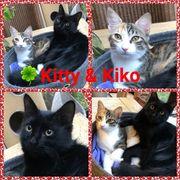 Kitty und Kiko suchen ihr