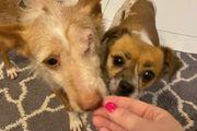 Gloria und Nino - auf Pflegestelle