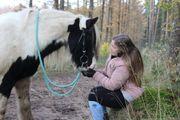Pflegebeteiligung reitbeteiligung Pferd zur Verfügung