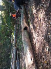 Buchenholz am Waldweg bei Netschkau