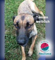 Tamsin - Ich bin schön sagen