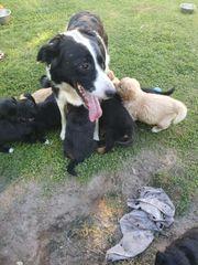 1 Jack Russell Terrier *Rüde in Kiel Elmschenhagen Kroog