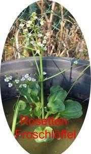 Biete Wasserpflanzen für Gartenteich