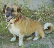 Tasha eine süße kleine Hundedame
