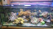 Meerwasseraquarium 450 l komplett mit