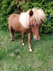 Notverkauf Pferde Kaufen Verkaufen