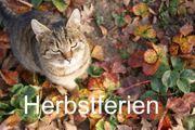 Urlaub mit KATZEN - Bayerischer Wald -