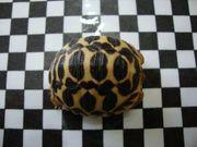 Landschikdkröten