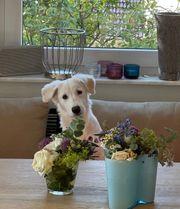 Die Süße Phiby 5 Monate