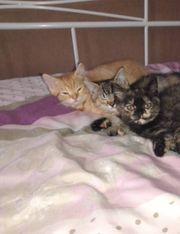 Kitten suchen ein schönes zu
