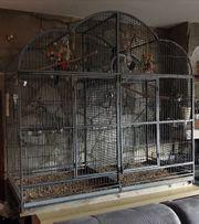 königssittiche abzugeben Vögel Sittiche