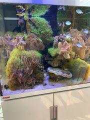 Diverse Korallen im allen Größen