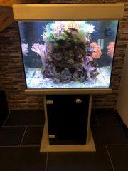 Aquarium Meerwasser 260 L Beleuchtung
