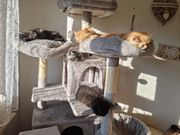 Unsere bunte Main Coon Truppe