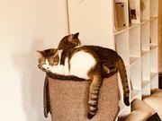 Liebenswerte Katzen suchen neues Zuhause