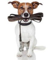 Spaziergang mit Ihrem Hund Gassi