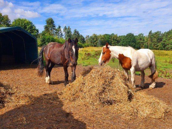 3 zu Pferde verkaufen