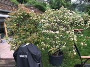 Pflanzen Garten guter Sichtschutz