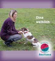 Dina - unsere Sportskanone