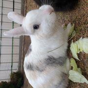 Suche ein Weibliches Kaninchen
