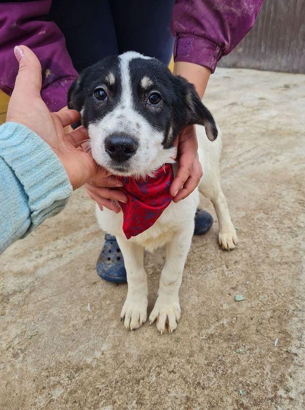 Sina - Hundemädchen aus Rumänien sucht ihre Familie, 4 Monate alt