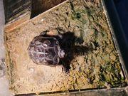 Schildkröte Zubehör