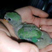 2 junge Vögelchen