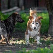 Viele verschiedene Hunde suchen liebevolle