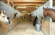 Suche Reitanlage Pferdestall