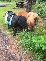 angeleitete Reitbeteiligung Ponygruppe