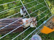 Kaninchen suchen aus Gesundheitsgründen ein