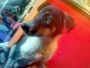 Jerry unser vorsichtiger Junghund