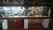Aquarium 240cm 60cm 65cm LED