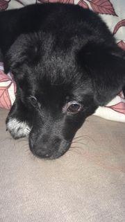 Kleiner Welpe sucht neues Zuhause