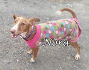 Verschmuste und fröhliche Podenca Nora