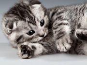 Suche cute Kitten helle Farbe