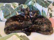 2 Katzen zum verschenken