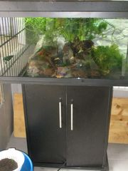 Aquarium Juwel 80cm lang mit