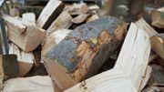 Brennholz in bester Qualität Kaminholz